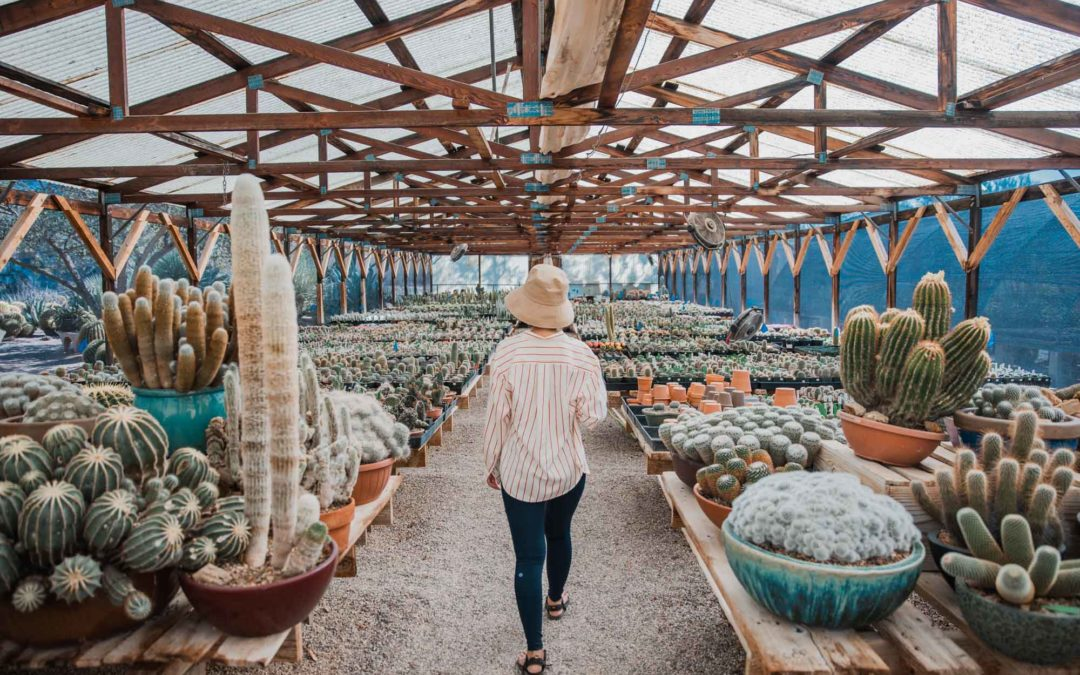 Best Plant Shops in Seattle & Beyond