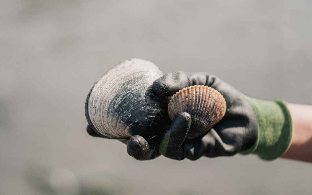 The Ultimate Guide to Clamming in Washington & Best Locations